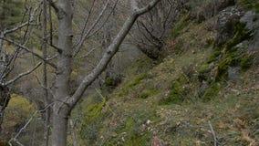 De herfst in het bos stock videobeelden