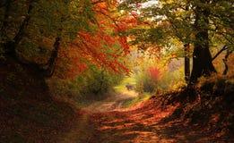 De herfst in het bos stock foto's