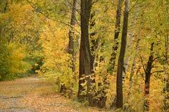 De herfst in het bos Stock Afbeelding