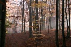 De herfst in het bos Royalty-vrije Stock Afbeeldingen