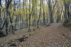 De herfst in het bos Royalty-vrije Stock Fotografie