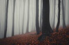 De herfst in het bos met rode gevallen bladeren Stock Fotografie