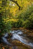 De herfst in het bos in Oct stock foto's