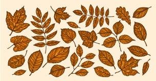 De herfst, het concept van de bladdaling Decoratieve boombladeren Vector illustratie vector illustratie