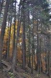 De herfst in het dikke hout stock afbeeldingen