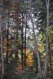 De herfst in het dikke hout royalty-vrije stock foto's