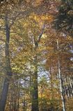 De herfst in het dikke hout royalty-vrije stock afbeeldingen
