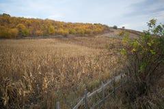 De herfst in het dorp royalty-vrije stock fotografie