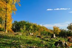 De herfst in het hout stock fotografie