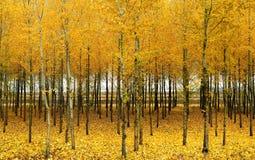In de herfst het hout Royalty-vrije Stock Afbeeldingen