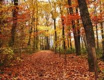 De herfst in het Hout Stock Afbeelding
