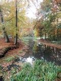 De herfst in het hout Stock Afbeeldingen