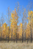 De herfst in het Land Royalty-vrije Stock Fotografie