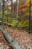 De herfst in het land Royalty-vrije Stock Foto's
