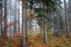 De herfst in het meest forrest Stock Afbeeldingen