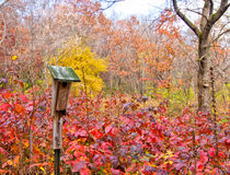 De herfst in het Midwesten Stock Fotografie
