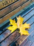 De herfst is het mooiste seizoen stock fotografie