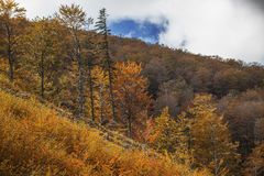 De herfst in het Nationale Park van Domogled Stock Foto's