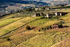 De herfst in het noordelijke die gebied van Italië langhe met kleurrijke wijn wordt geroepen Stock Fotografie