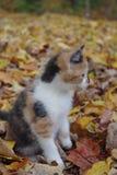 In de herfst het onderzoeken Stock Afbeeldingen