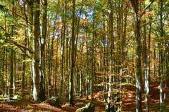de herfst het over de bossen komt royalty-vrije stock fotografie