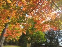 De herfst in het park stock foto