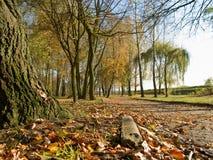 De herfst in het park Stock Foto's