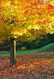 De herfst in het park Royalty-vrije Stock Foto
