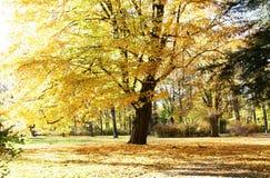 De herfst in het park Royalty-vrije Stock Afbeeldingen