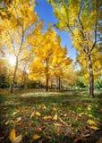 De herfst in het park Stock Afbeelding