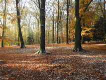 De herfst in het park Royalty-vrije Stock Fotografie