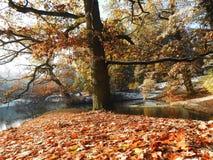 De herfst in het park stock afbeeldingen