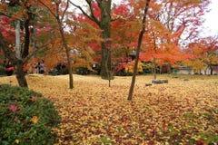 De herfst in het park in Japan stock fotografie