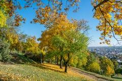 De herfst in het park met mening over Boedapest Stock Foto