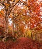 De herfst in het park van Campo dei Fiori, Varese Stock Afbeelding