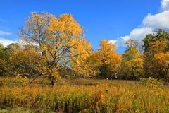 De herfst in het park van de Erfenis stock foto