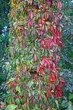 De herfst in het platteland, 3 royalty-vrije stock fotografie