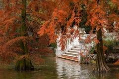 De herfst in het Retiro-Park in Madrid Stock Afbeeldingen