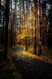 De herfst in het schaduwrijke bos met de weg, Rusland, Ural stock afbeeldingen
