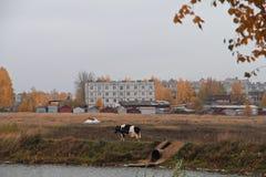 De herfst in het stadspark stock fotografie