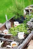 De herfst het tuinieren Stock Afbeeldingen