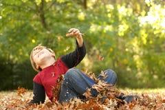 In de herfst het vallen over Stock Fotografie