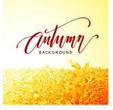De herfst het van letters voorzien op oranje bladerenachtergrond royalty-vrije stock foto