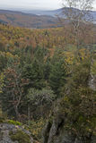 De herfst in het Zwarte Bos Royalty-vrije Stock Foto