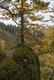 De herfst in het Zwarte Bos Royalty-vrije Stock Fotografie