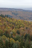 De herfst in het Zwarte Bos Stock Afbeelding