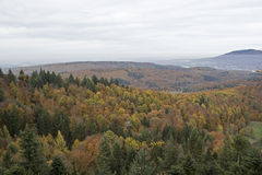 De herfst in het Zwarte Bos Royalty-vrije Stock Foto's