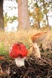 De herfst is hier Stock Fotografie