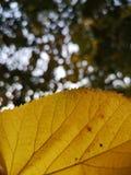 De herfst is hier royalty-vrije stock fotografie