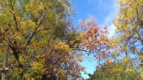 De herfst is hier Stock Afbeeldingen